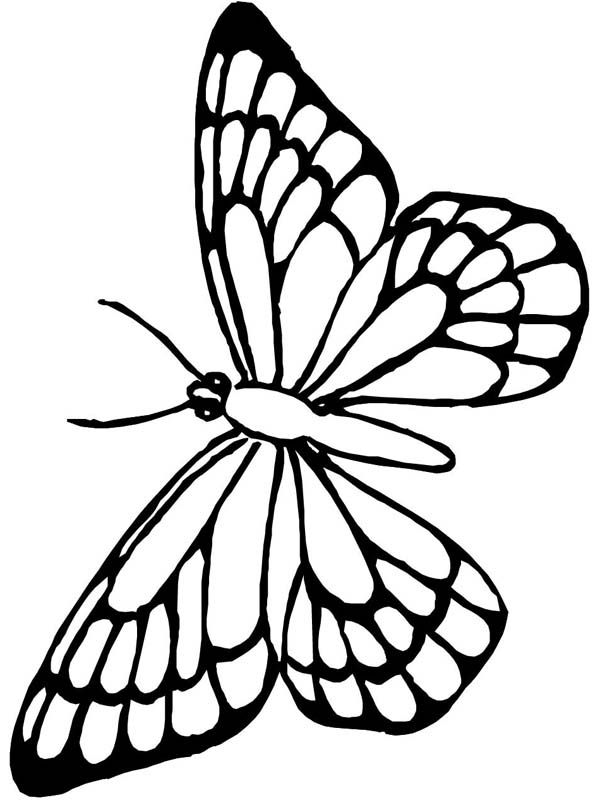 Butterfly Lovely Butterfly Flying Around Coloring Page