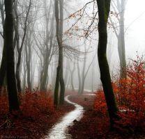 Scarlet Forest by Nelleke