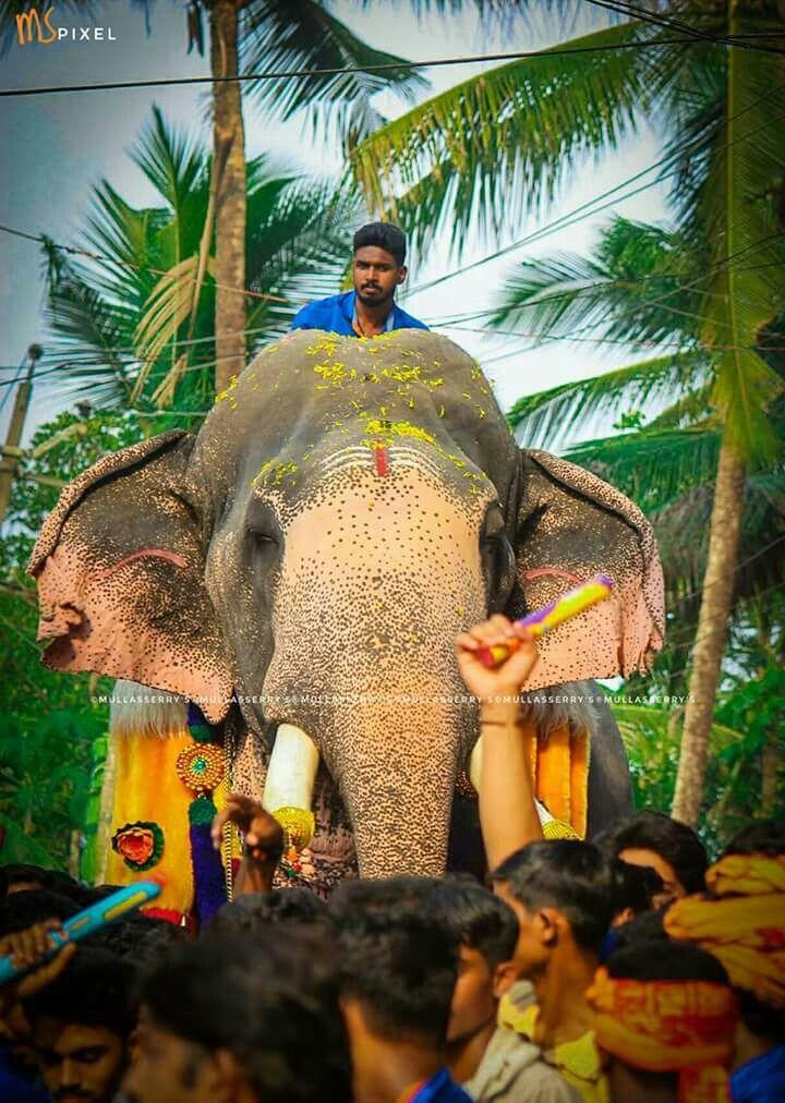 Pin By Kichuz On Puthupallyk7 Indian Elephant Elephant