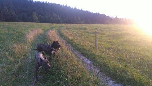 Večerná prechádzka so psami 🐕