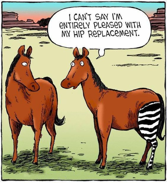 Hello Tuesday! #Didyouknow - Each hip bone is a large, flattened, & irregularly shaped fusion of three bones: the ilium, ischium, & pubis.