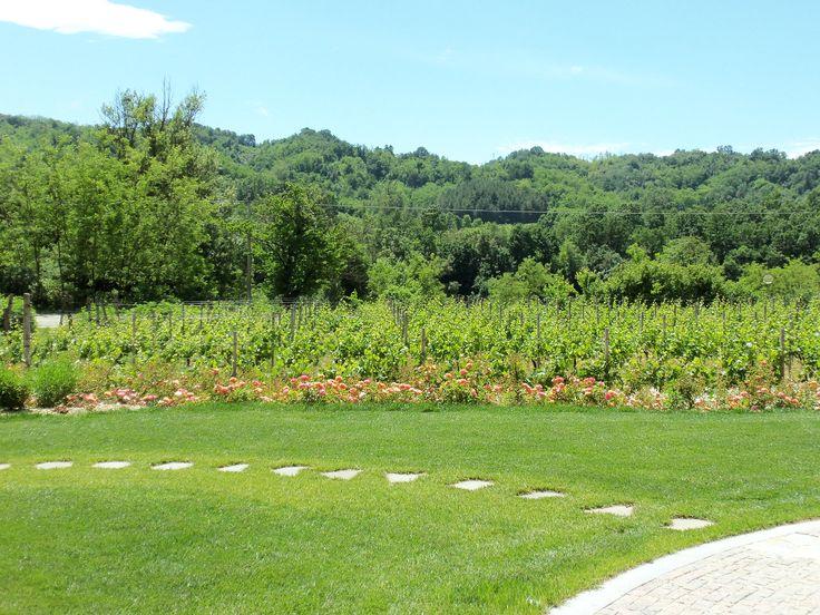 Gavi Wine Tour, storie di vino e incantevoli luoghi