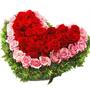 This sweet love hamper includes 50 red and pink roses in heart shape arrangement. http://www.tajonline.com/valentines-day-gifts/product/v2862/ravishing-romance/?aff=pint2014/