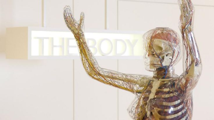 Medicine Now | Wellcome Collection - Wellcome Trust