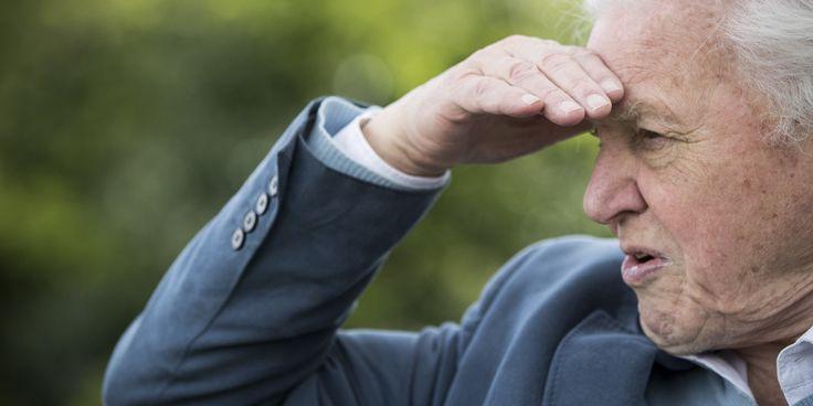 Nature Doc Extraordinaire David Attenborough Joins BBC's 'Blue Planet' Sequel
