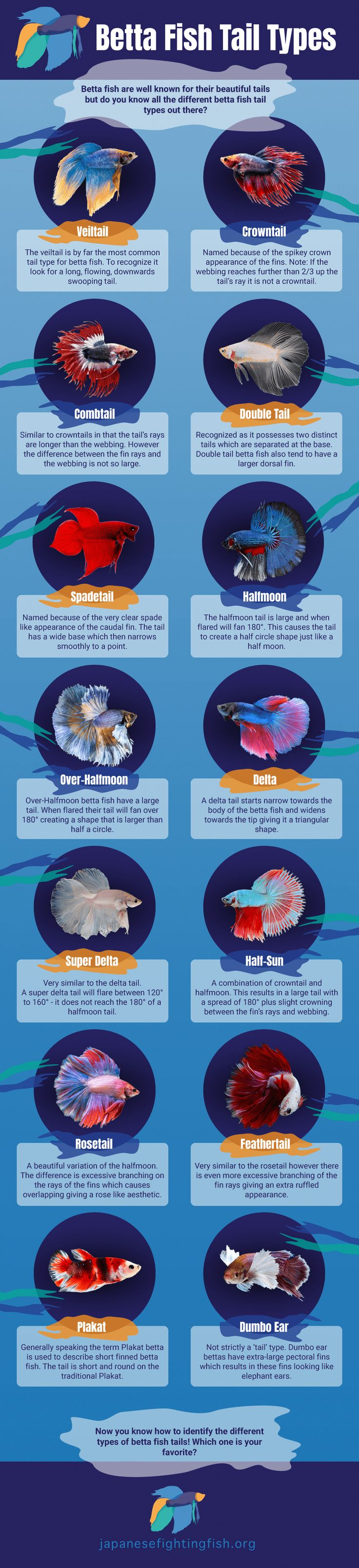 Betta fish are well known for their beautiful tails but do you know all the different betta fish tail types out there? Do you know what type of tail your betta fish has? This infographic shows them all.