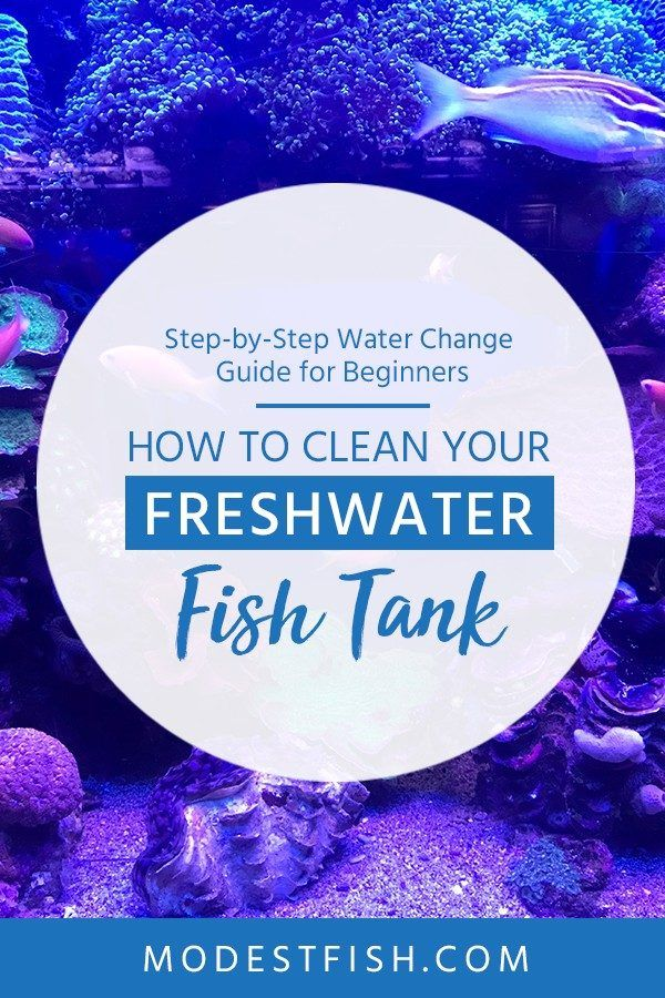 How To Clean A Freshwater Fish Tank Water Change Guide For Beginners Fresh Water Fish Tank Fish Tank Cleaning Fish Tank