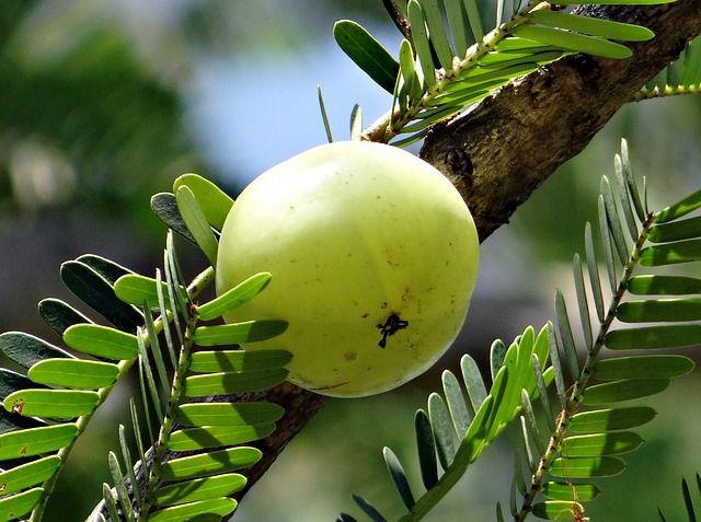 Health Benefits of Triphala powder are Amazing