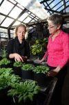 Fruit loving Lemurs Score High on Spatial Memory Test