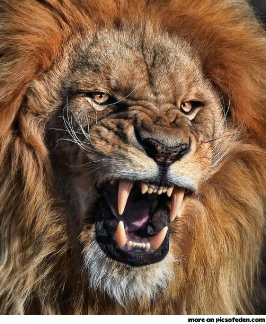 King of Africa. Man kann nicht immer lächeln!