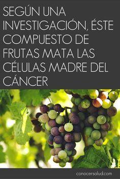 Según una investigación éste compuesto de frutas mata las células madre del cáncer #salud