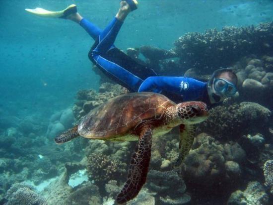 Picture of Coral Bay, Western #Australia http://www.tripadvisor.com.au/ShowForum-g255101-i530-Western_Australia.html