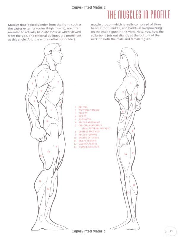 Best Figure Drawing Books for Beginners - Concept Art Empire
