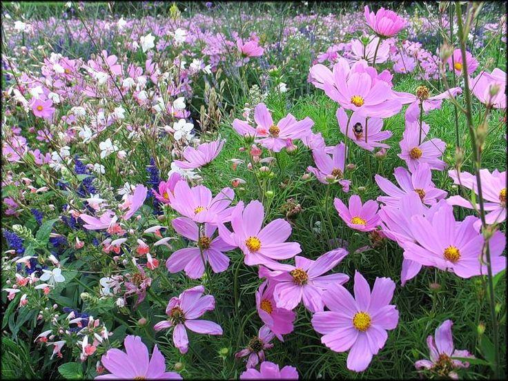 Фото из статьи: Что посадить на 6 сотках: деревья, растения, кустарники и цветы