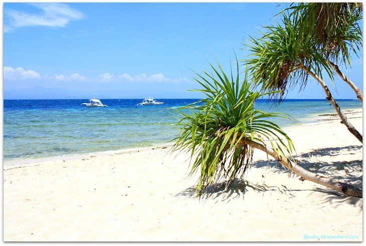 Basdaku Beach Resort Moalboal Cebu Cebubluewaters Com A Must