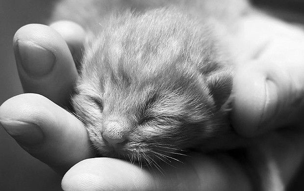 O filhote de gato cabe na palma da mão (Foto: Reprodução/onebigphoto.com)