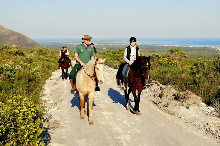 A Guide to Grootbos' Heart | Grootbos #horseriding #guides http://www.grootbos.com/en/blog/eco-tourism/a-guide-to-grootbos-heart