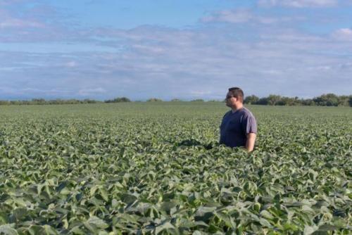 La certificación agrícola sigue siendo percibida como un lujo: no está en la agenda de la mayor parte de los productores | Federación de Centros y Entidades Gremiales de Acopiadores de Cereales