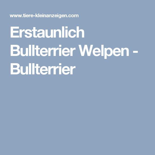 Erstaunlich Bullterrier Welpen - Bullterrier