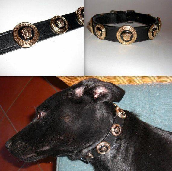 d4b5387eccc Versace gold Medusa Head Studded Designer dog collar. Medium size. Custom  made in Italy. Bling up yo