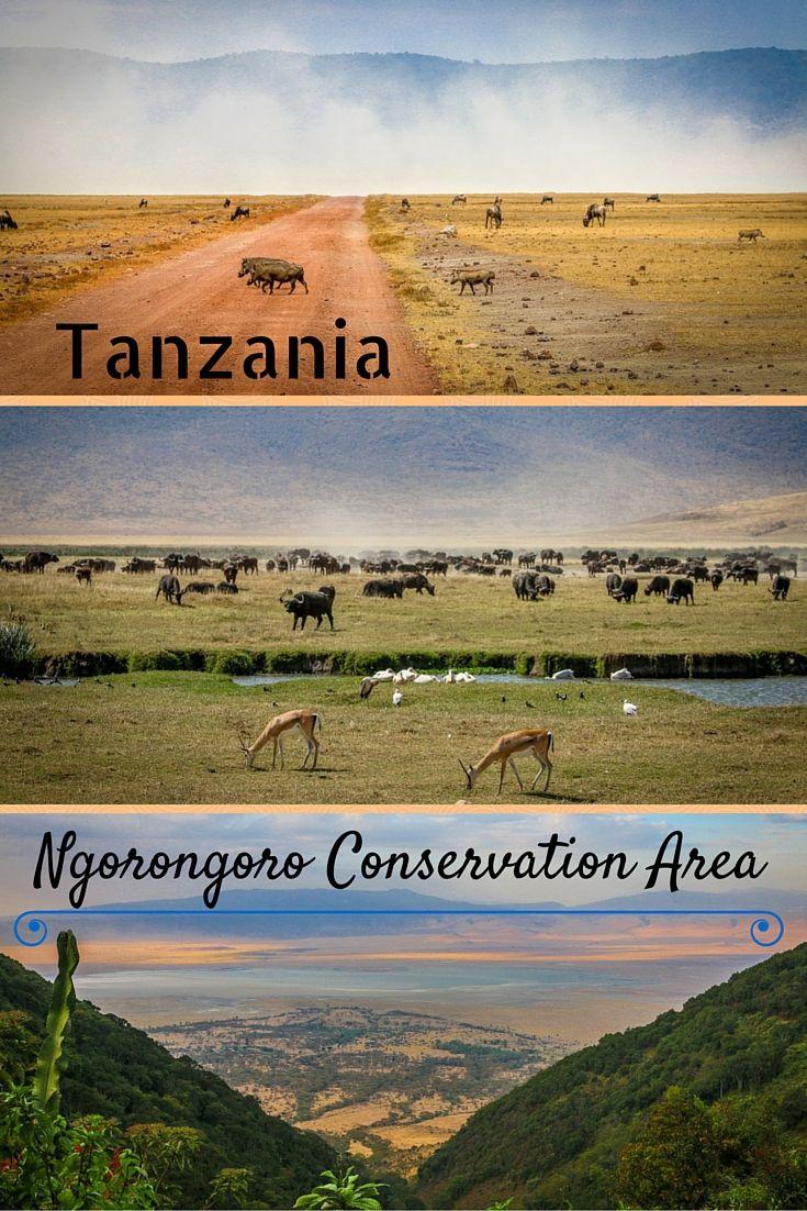 This UNESCO World Heritage Site is widely considered one of the world's most pristine wildlife sanctuaries... Ngorongoro crater | Ngorongoro Tanzania | Ecotourism | Wildlife - @greenglobaltrvl