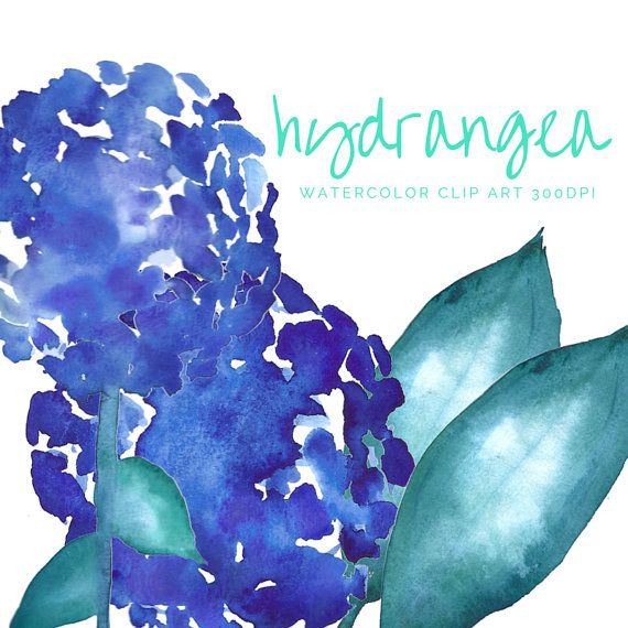 HYDRANGEA Clip Art Watercolor blue green leaves by theartcitizen