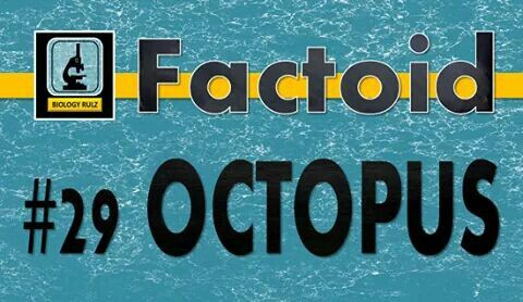 """Did you know:  The #octopus is a soft-bodied, eight-armed #mollusc and is related to #squid, #cuttlefish, and the #nautiloids. The octopus has a symmetrical body plan with 2-eyes and 8-arms (sometimes mistakenly called """"#tentacles""""). The octopus has its mouth at the center of its arms and a hard, bone-like beak surrounding its mouth. Octopuses use their siphons to breath as well as to forcefully expel water as their primary mode of #locomotion. Octopuses have a complex #NervousSystem and…"""