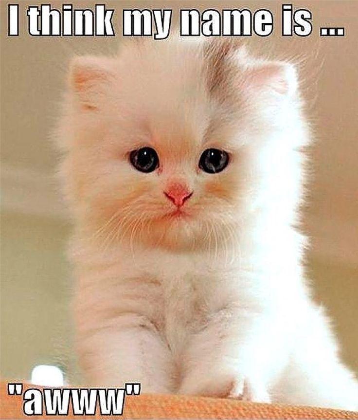 It sure is little one !