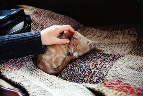 . {<3}: Meow, Posts, Sweet Kittens Cats, Knitted Blankets, Kitties, Kitty, Animal