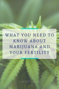 Ce que vous devez savoir sur la marijuana et votre fertilité  – Pregnancy