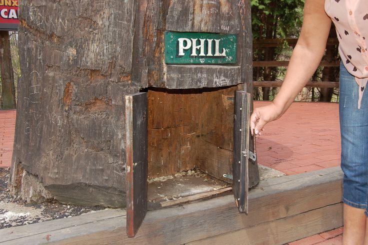 17+ Images About Groundhog Day, Punxsutawney Phil On