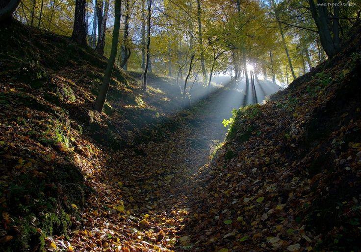 Las, Liście, Promienie, Słońca