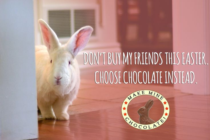 Belinda Says: chocolate is the way to go at Easter!  Take some time.  Talk to rescues and shelters.  And don't bring an animal in to your home on a busy weekend or holiday...everyone will be happier in the long run!