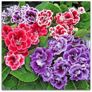 77 best plantes non toxiques pour les chats images on pinterest indoor house plants green. Black Bedroom Furniture Sets. Home Design Ideas