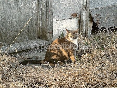 Spotted tabby — Stock Photo #70536639