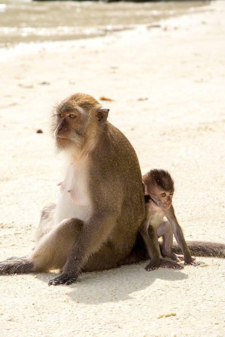Monkey Beach - Ko Phi Phi Don - Les avis sur Monkey Beach - TripAdvisor