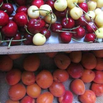 La nostra frutta appena raccolta