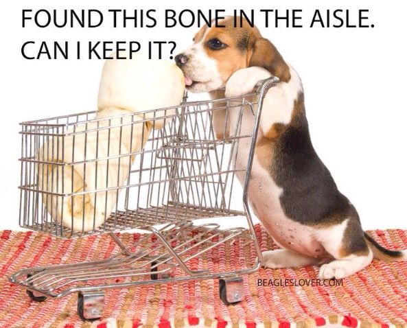 556 Best Beagles Images On Pinterest Doggies Pets And