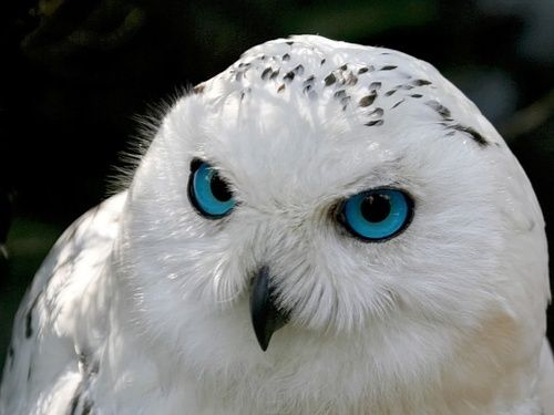 blue eyes up close - Google Search