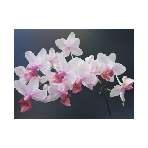 Phalaenopsis Orchids Twilight Rainbow Canvas Prints
