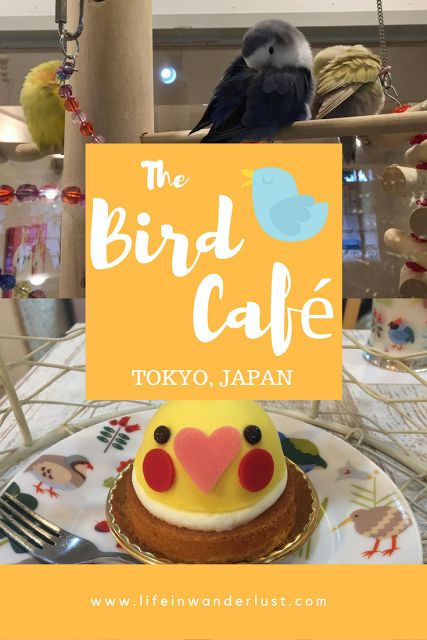 Tea time at the Bird Cafe in Tokyo, Japan! One of many animal cafes in Japan.