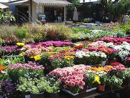 HOW TO SAVE MONEY AT THE NURSERY  Follow these tips to save a little green when buying plants for a landscaping job.