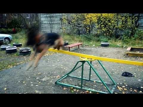 Дрессировка Собак по Методике Видео TreT Style - YouTube
