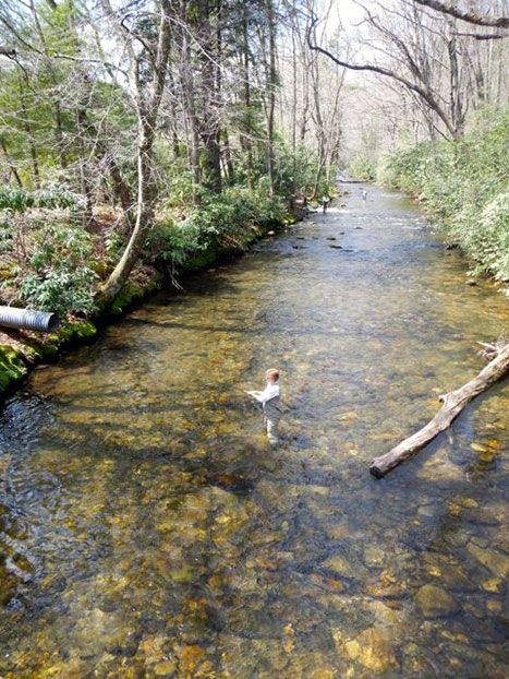 34 best images about on the river on pinterest lakes for Best trout fishing in nc