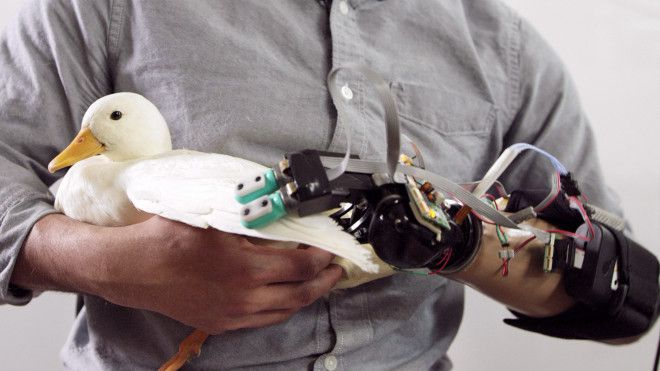 Prosthetics with BioTac robotic fingers can sense the fluffiness of a bunny and the fragility of an egg.