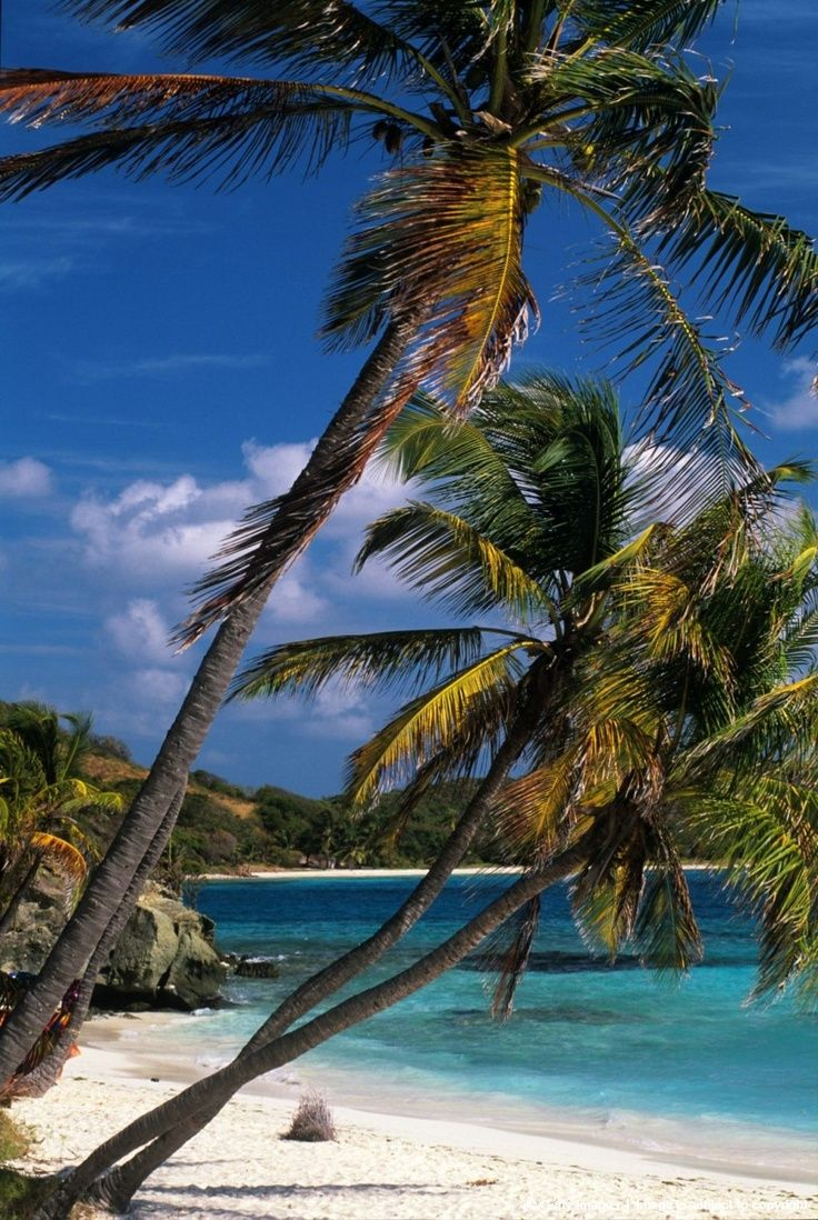 tobago cays grenadine islands | ,Tobago Cays,Grenadines islands,Saint Vincent and the Grenadines ...
