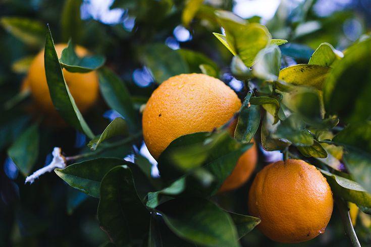 DIY Amer Picon recipe | Photo: Justin Kern | Amaro Ramazzotti, Combier, orange bitters, bitter dried orange peels