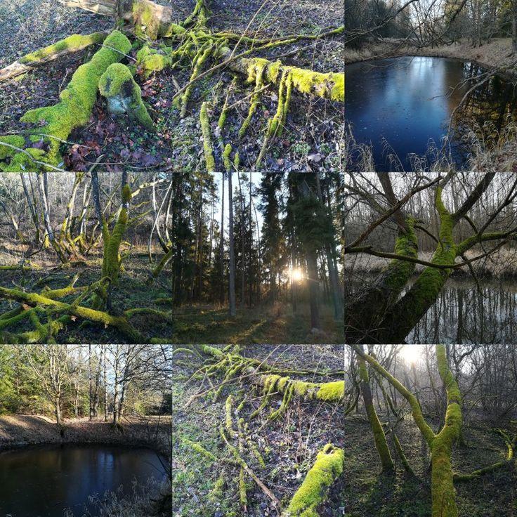 Vánoční procházka v lese 2017🌲🐉🍀🐢