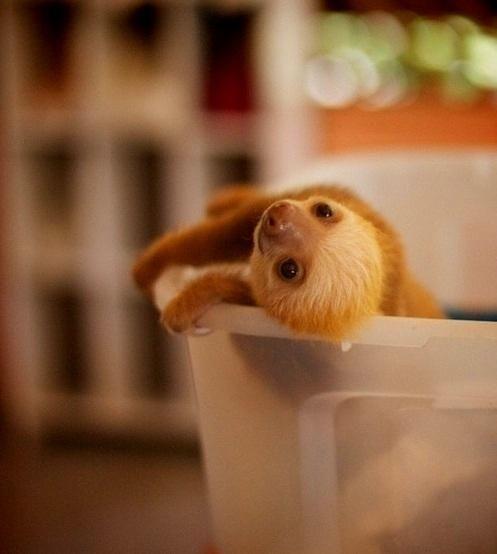 Pardon me, may I borrow a cup of Sloth?