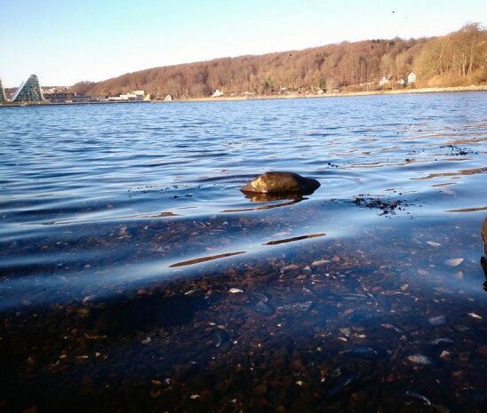 #Vejle fjord